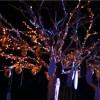 Happy experiences of using Livon Moroccan Silk Serum dangle on the Argan tree.